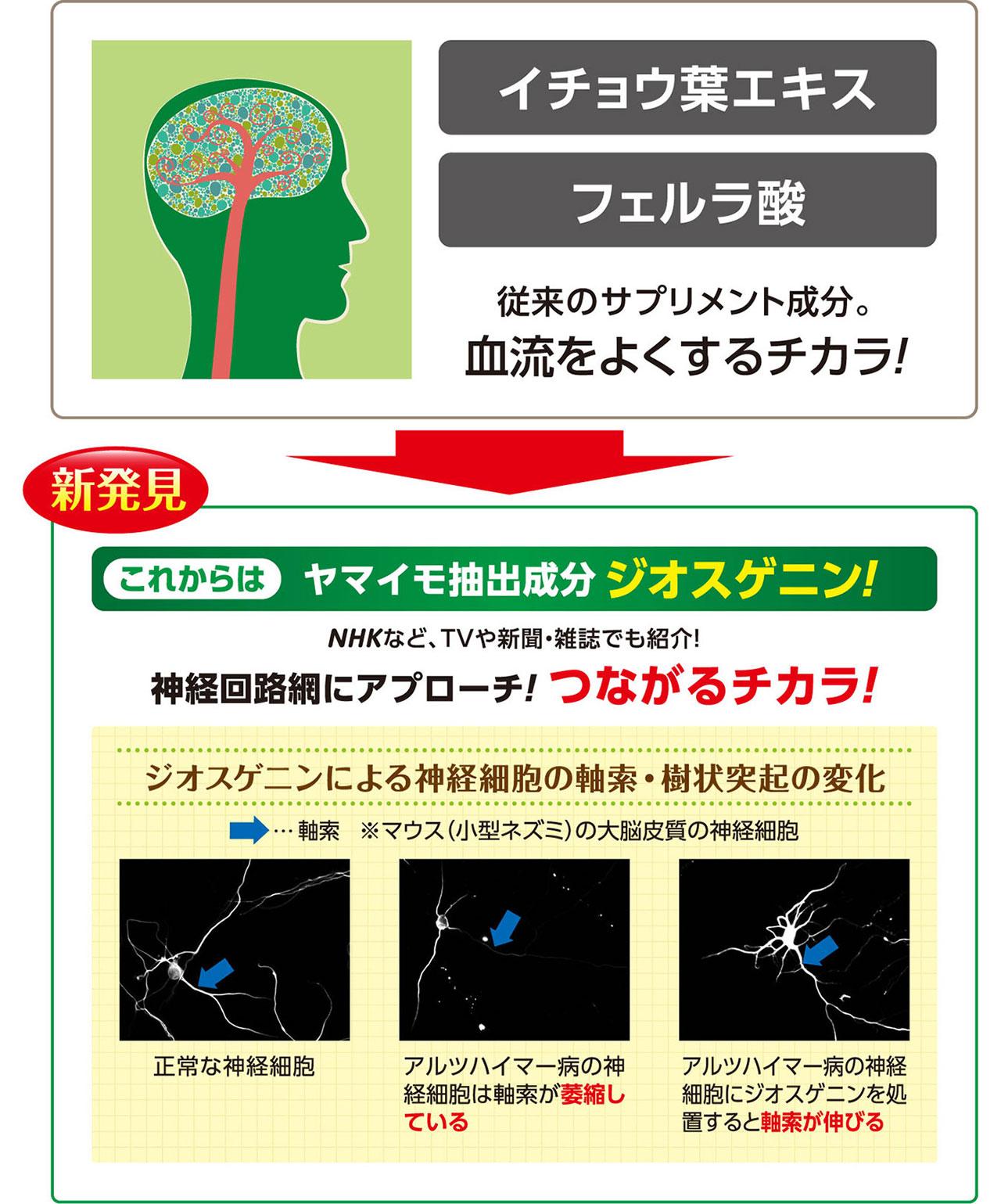 ヤマイモ抽出成分「ジオスゲニン」。神経回路網にアプローチ!つながるチカラ!