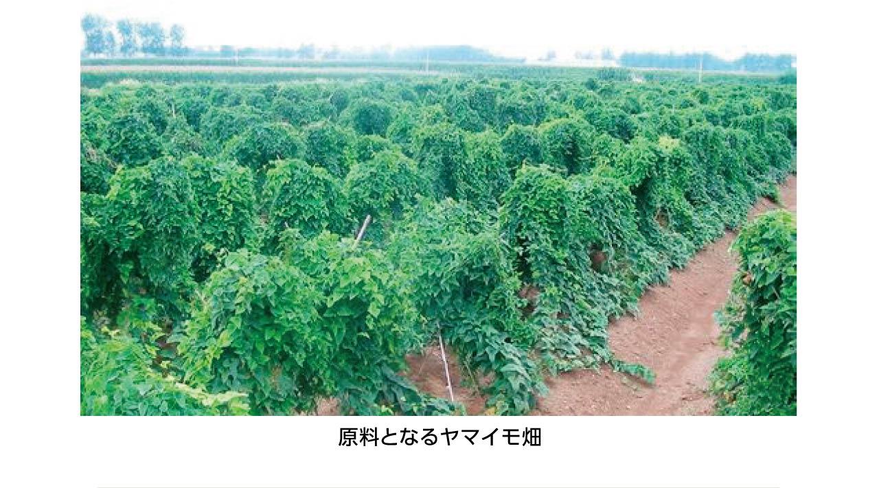 原料となるヤマイモ畑